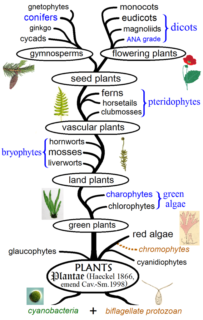 Types of Plants