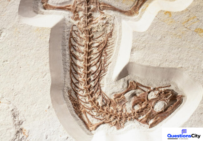 How Are Fossils Formed