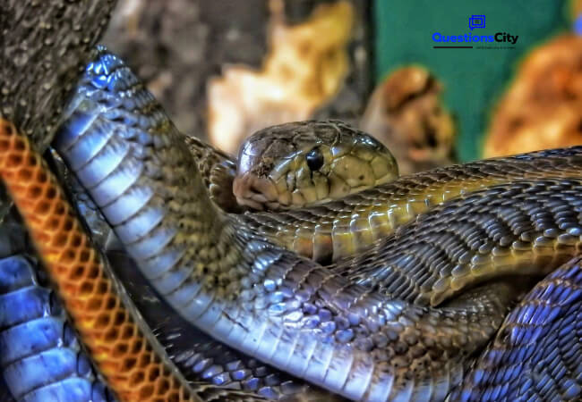Why Do Snakes Have Scales
