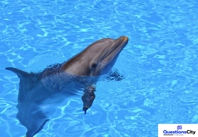 What Is A Dolphin