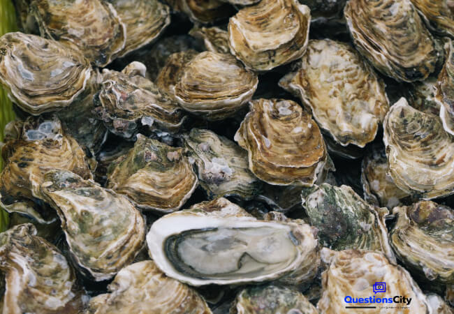 How Are Oysters Born