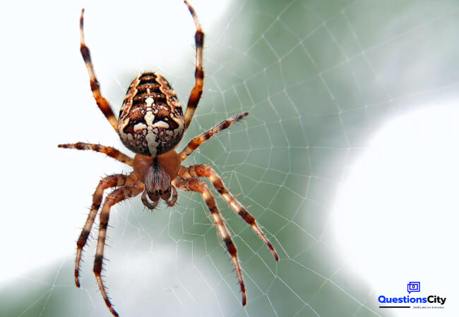 How Do Spiders Spin Their Webs