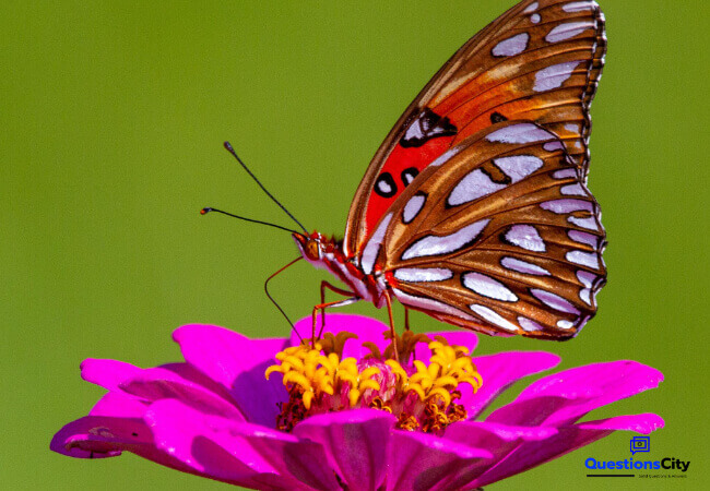 What Does A Butterfly Eat