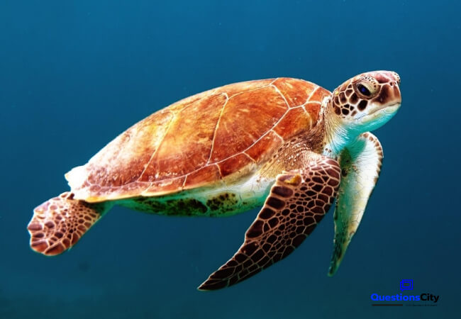 Does The Turtle Have A Voice