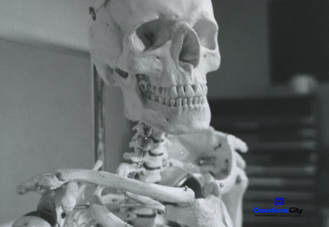 Why Do We Have A Skeleton