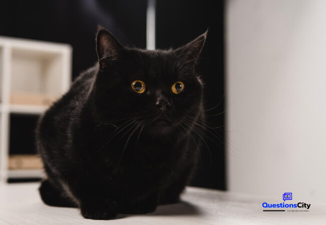 Why Is A Black Cat Considered Bad Luck